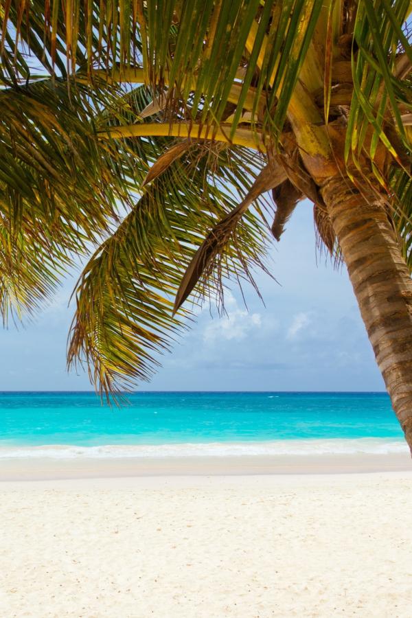en palme og en strand - en lækker rejse