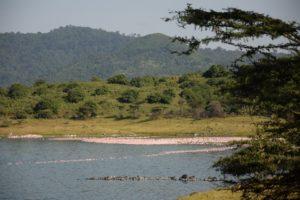 Rejser til Arusha