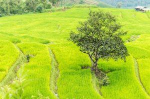 Rejser til Chiang Mai