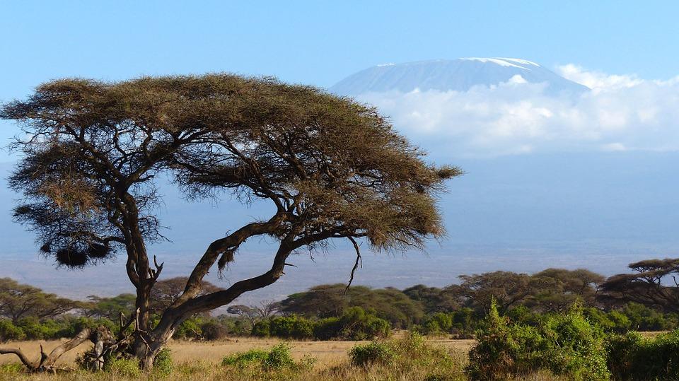 Rejser til Kilimanjaro