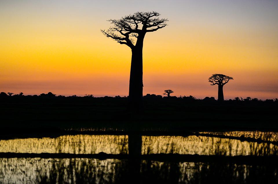 Rejser til Madagaskar
