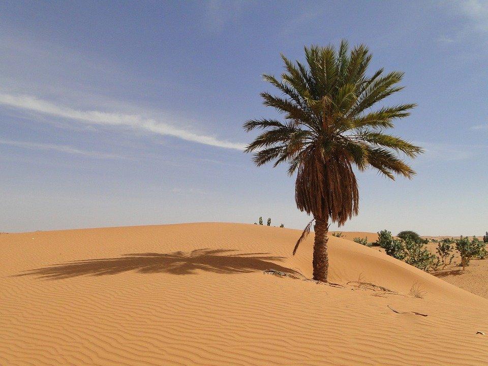 Rejser til Mauretanien