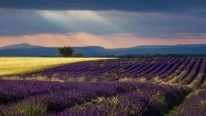 Rejser til Provence