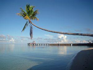 Rejser til Sulawesi