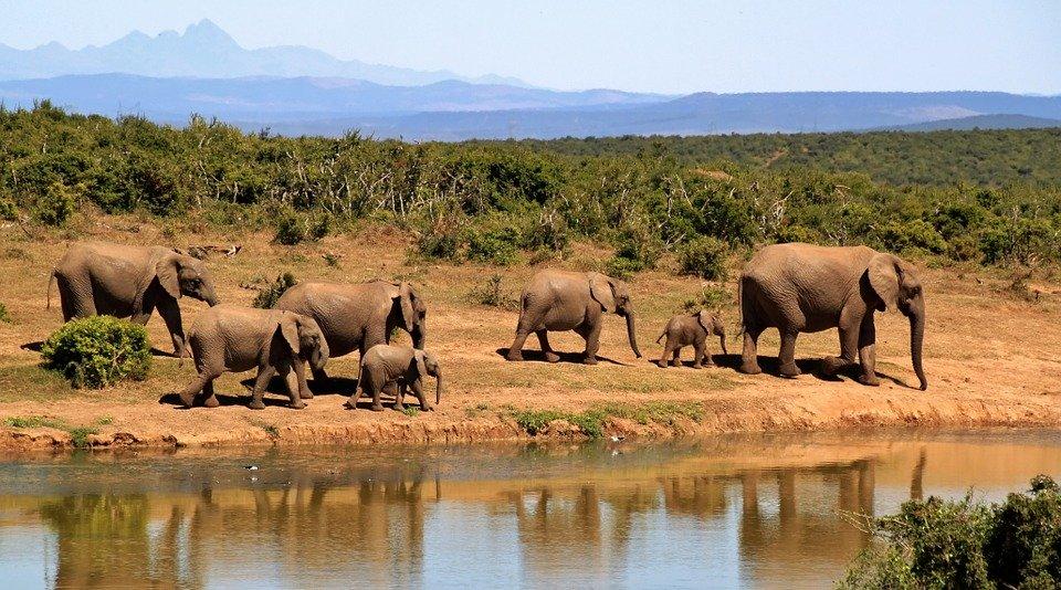 Rejser til Sydafrika