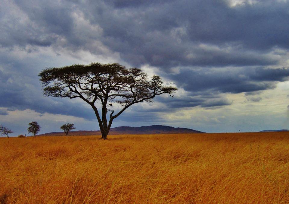 Rejser til Tanzania