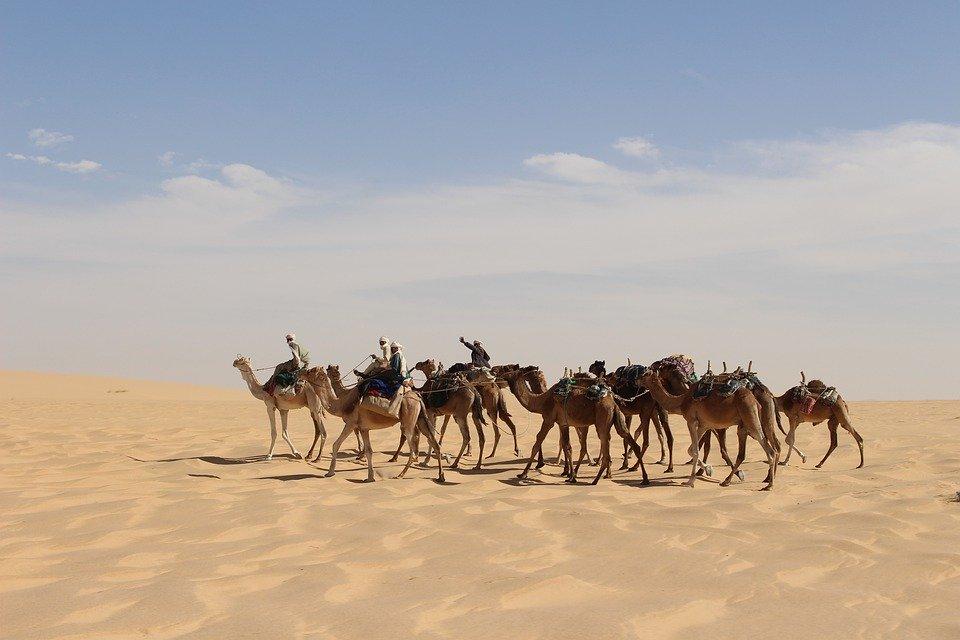Rejser til Tchad